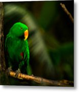Green Eclectus Parrot Male Metal Print