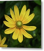 Green Eyed Daisy Metal Print
