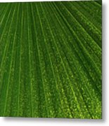 Green Fan - Radiating Lines And Scattered Polka-dots Metal Print