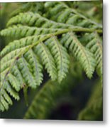 Green Fern Metal Print
