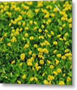 Green Field Of Yellow Flowers 1 Metal Print