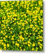 Green Field Of Yellow Flowers 2 1 Metal Print