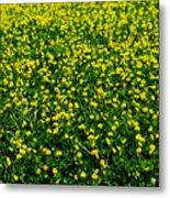Green Field Of Yellow Flowers 3 Metal Print