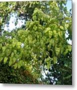 Green Fizalis Plant Metal Print