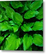 Green Foliage Metal Print
