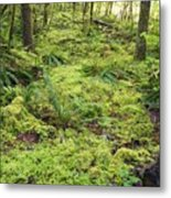 Green Foliage On The Forest Floor Metal Print