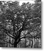 Green Giant In Black And White Metal Print