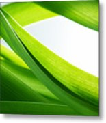 Green Grass Background Metal Print