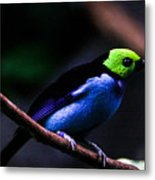 Green Headed Bird Metal Print
