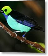 Green Headed Bird On Branch Metal Print