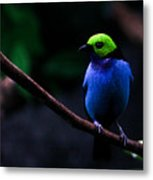 Green Headed Bird Profile Metal Print
