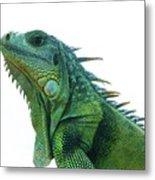 Green Iguana 1 Metal Print