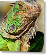 Green Iguana Series Metal Print