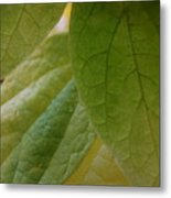 Green In Vein Metal Print