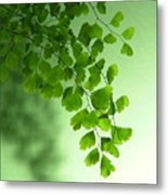 Green Is The Colour Metal Print