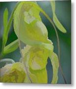 Green Lady Slipper Orchid Metal Print