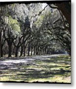 Green Lane With Live Oaks - Black Framing Metal Print
