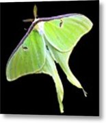 Green Lantern Moth Metal Print