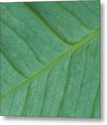 Green Leaf 1 Metal Print