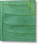 Green Leaf 2 Metal Print