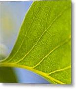 Green Leaf Backlit  Metal Print