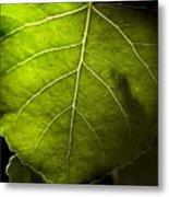 Green Leaf Detail Metal Print