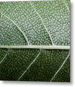 Green Leaf Geometry Metal Print by Ryan Kelly
