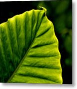 Green Leaf Metal Print