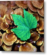 Green Leaf On Fungus Metal Print