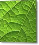 Green Leaf Structure Metal Print