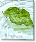 Green Leaf With Water Reflection Metal Print