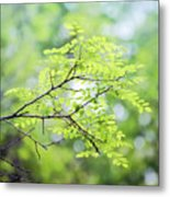 Green Leaves In The Forest Metal Print
