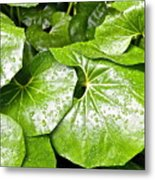 Green Leaves Longwood Garden Metal Print