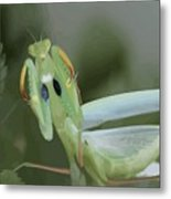 Green Mantis With Garden Background Vector Metal Print