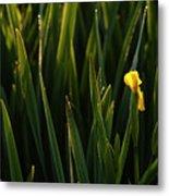 Green Marsh Grass At Sunrise On Lake Cassidy  Metal Print