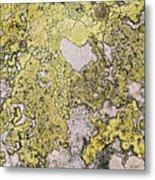 Green Moss On Rock Pattern Metal Print