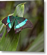 Green Moss Peacock Butterfly Metal Print