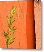 Green On Orange 2 Metal Print