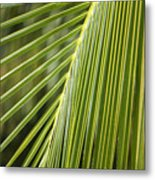 Green Palm Leaf Metal Print