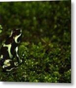 Green Poison Dart Frog Metal Print