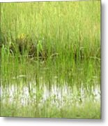 Green Reflections Metal Print