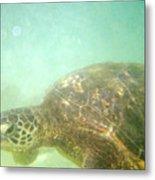 Green Sea Turtle 2 Metal Print