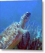 Green Sea Turtle 3 Metal Print