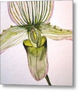 Green Slipper Orchid Metal Print