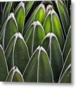 Green Spines Metal Print