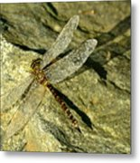 Green Spotted Dragonfly 1 Metal Print