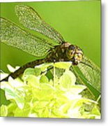 Green Spotted Dragonfly 2 Metal Print