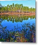 Green Swamp In December Metal Print