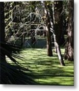 Green Swamp Near Camps Canal Metal Print