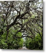 Green Swamp Oak Bower Metal Print